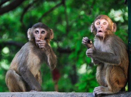 Baby monkeys in Kathmandu, Nepal
