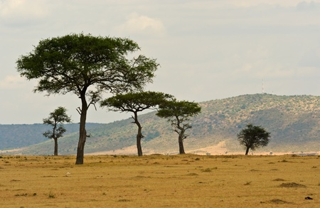 in the beautiful plains of the masai reserve in kenya africa photo