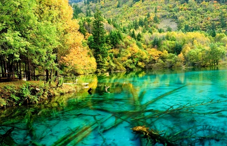 Crystal clear azure blue waters of Panda Lake surrounded by connifers and mountainsides in Jiu Zhai Gou National Scenic Park in Sichuan Province, China. Stock Photo