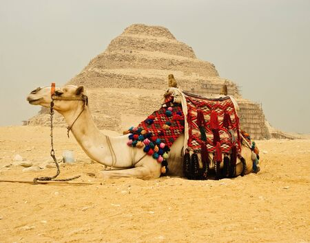 Decorated camel in front of pyramid of Gizeh, Cairo, Egypt photo