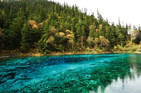forest and mountain reflecting in a lake,Jiuzhaigou,China
