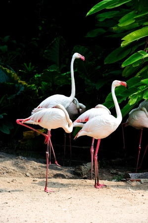 flamingo bird in the zoo photo