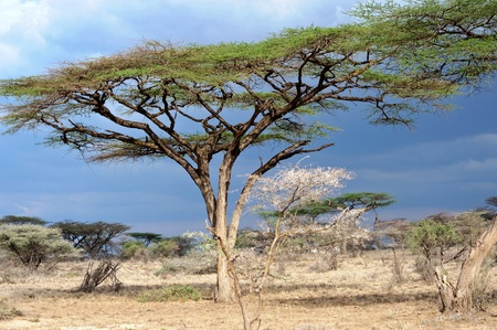 tree in the Tanzania