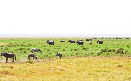 wildebeest  and elephants  in Tanzania