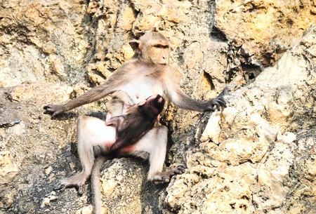 Mother monkey and baby photo