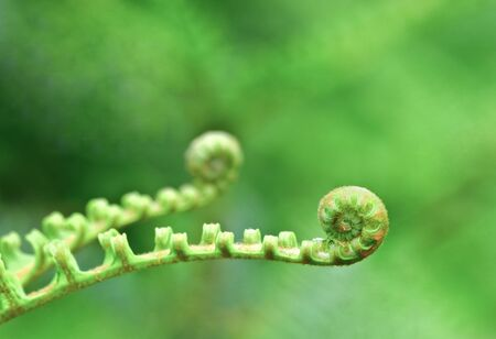 new Fern leaf photo