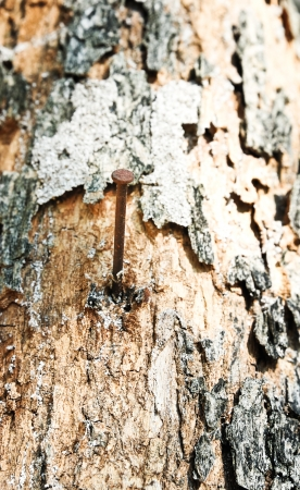 conclusive: Aged rusty nail in tree with bark detail