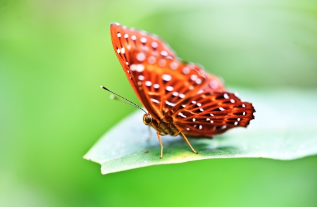 Beautiful butterfly stay on a green leaf photo