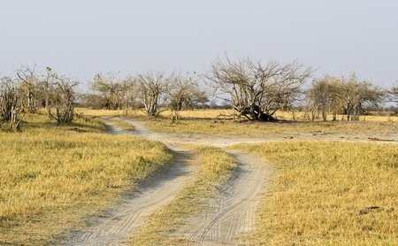 forest road in Africa photo