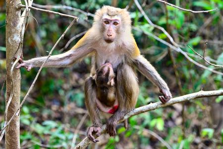 b�b� singe: baby monkey and mother