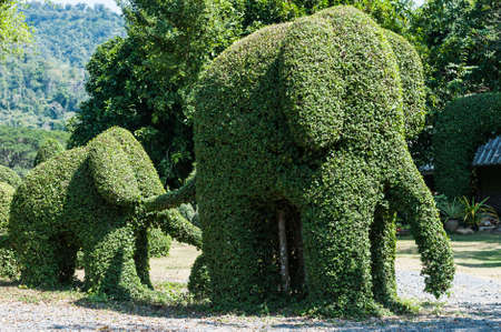 tree pruning is a big elephant in the garden Stock Photo
