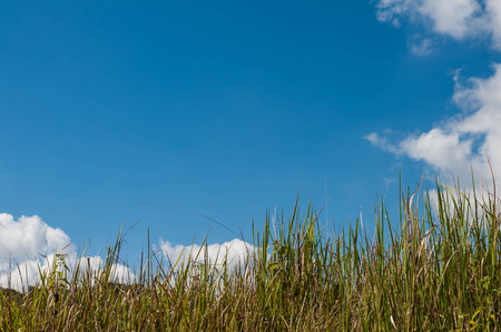 nature background, green grass and blue sky