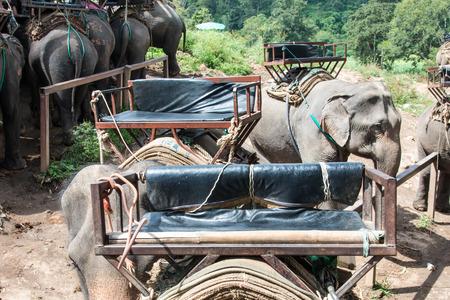 Elephant Awaiting Passenger in Chiangmai Thailand