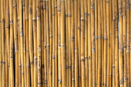 Old bamboo fence photo