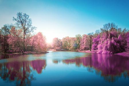 field maple: Purple Autumn Forest  in Blue Lake Stock Photo