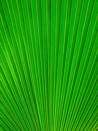 Palm Leaf radius for web page or background Stock Photo - 7185064