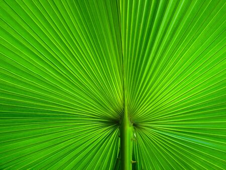 Palm Leaf radius for web page or background Stock Photo - 7185059