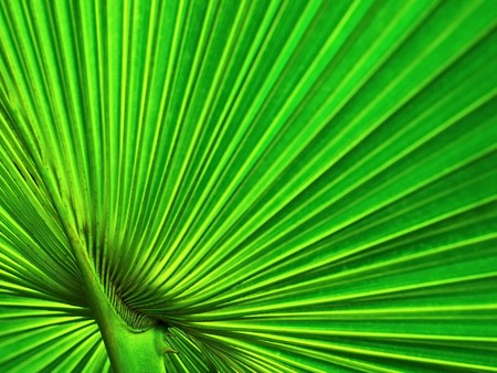 aura energy: radial line of palm leafe Stock Photo