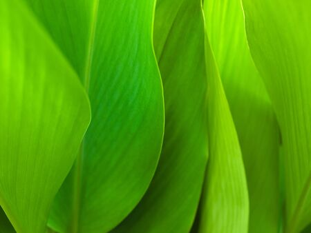 Green leaf background abstract of nature Stock Photo - 7236030