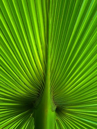 Palm Leaf radius for web page or background Stock Photo - 7236054