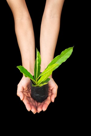 Hand holding plant isolated in black background photo