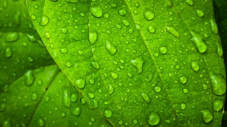 water drop on Green leaf background abstract of nature