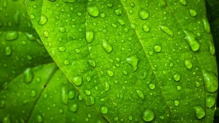 water druppel op groen blad achtergrond abstracte aard