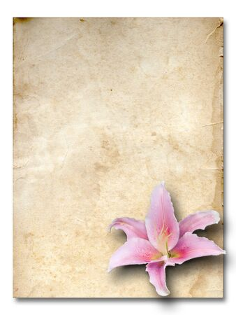 pink lily flower old brown grunge paper Stock Photo - 7860407