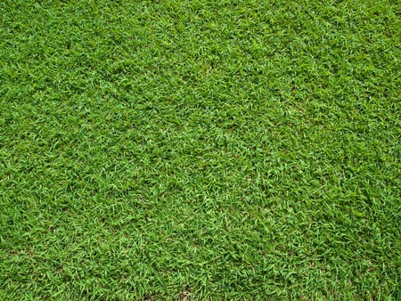 Top View of Green Grass Texture and surface Stock Photo