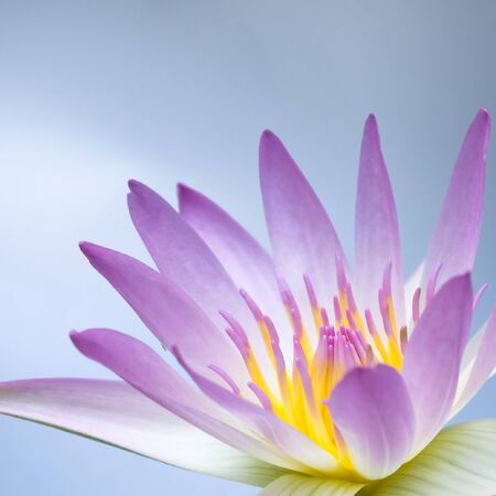 pink lotus on light blue sky background photo