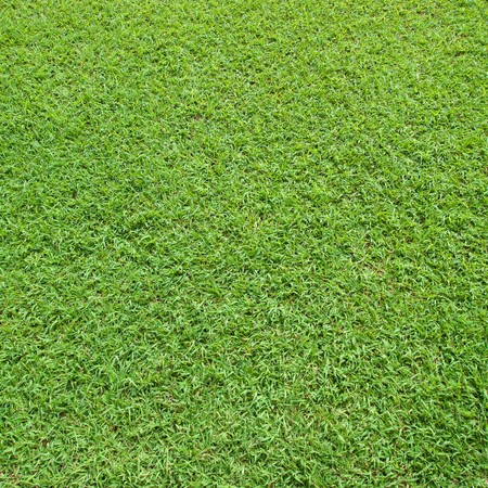 Background beautiful lawn in a square frame