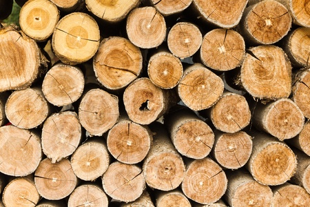 The section of the circular timber. Made for firewood.