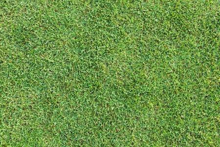 Top Ansicht der grünen Gras Textur und Oberfläche Standard-Bild - 8524614