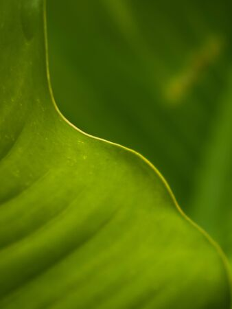 Curved line of green leaf Abstract background