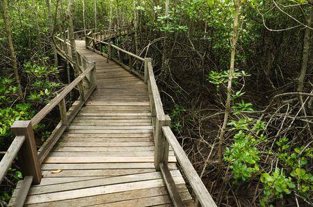 mangrove forest: Wood Boardwalks go to mangrove forest, Thailand