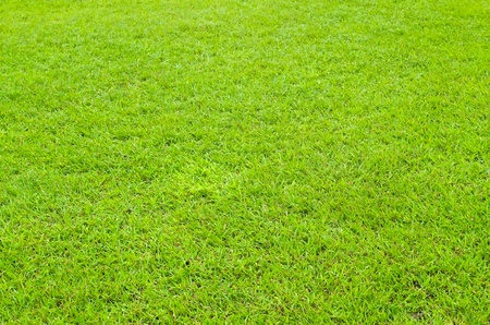 Bright green grass on the ground