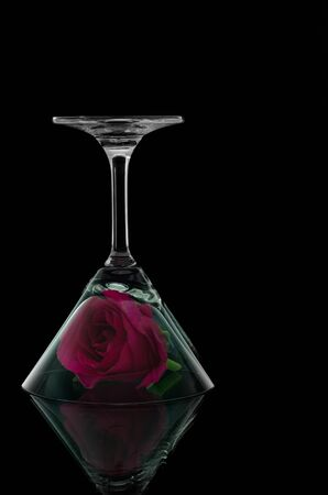 overturn: Rose in overturn cocktail glass on black background and reflect