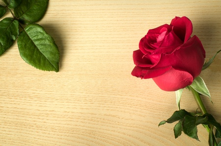 Red rose side on wood and green leaves on wood table photo