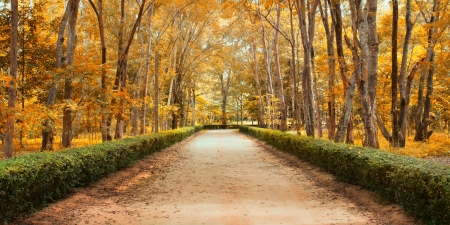 Panorama Pathway in Beautiful autumn park Landscape Stock Photo - 15469283