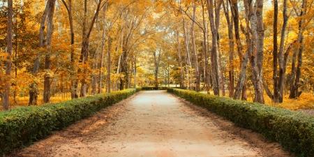 Panorama Pathway in Beautiful autumn park Landscape Stock Photo - 15469283