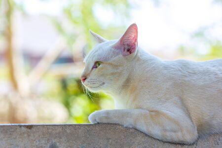 Cat Enjoying His Life Outdoors and soft focus