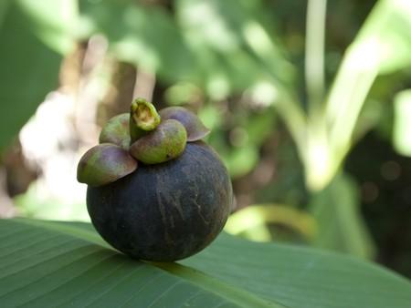 banana leaf: Mangost�n en hoja de pl�tano