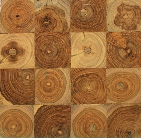 golden section: cross section of a tree with tree rings Stock Photo