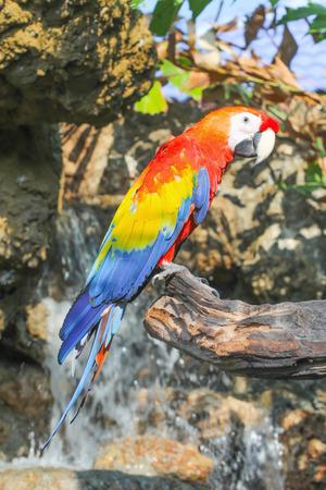 aves: Macaw Bird Stock Photo