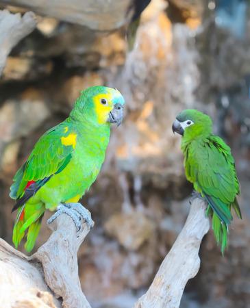 guacamayo: Guacamayo de aves Foto de archivo