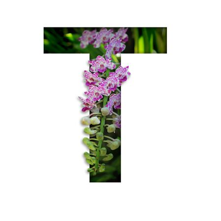 Font with flower T made form the flower for desing decoration