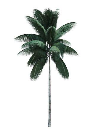 Nature object coconut tree isolated on white background Reklamní fotografie - 148276983