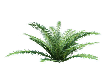 3d Render Bush Tree Isolated on white background