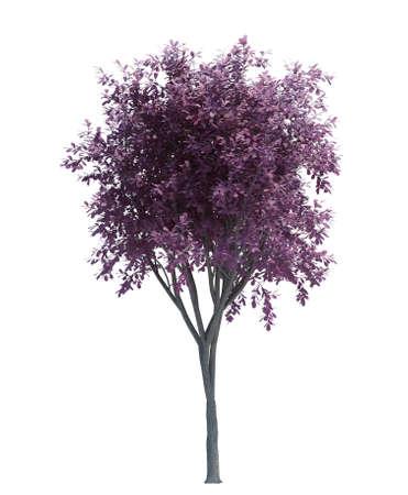 Nature object tree isolated white on background