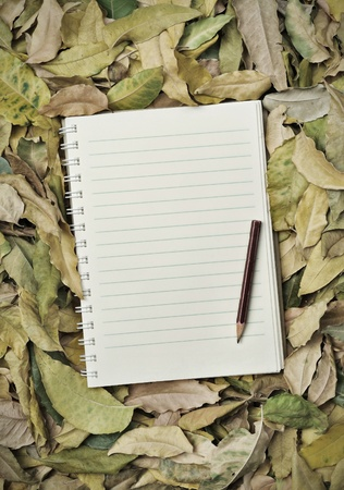 Note on a pile of autumn leaves  Stock Photo
